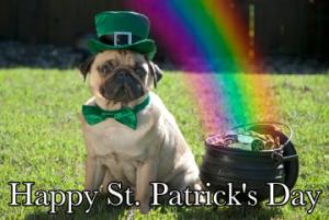 St. Patrick's Day Pug